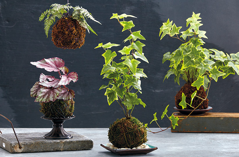 how-to-make-kokedama-care: Using small trays under your kokedama will help protect your indoor surfaces.