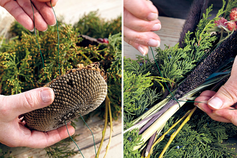 bird-feeding-wreath-sunflowerhead cattail step1: Using florist wire, attach seedheads and millet sprays to your wreath.