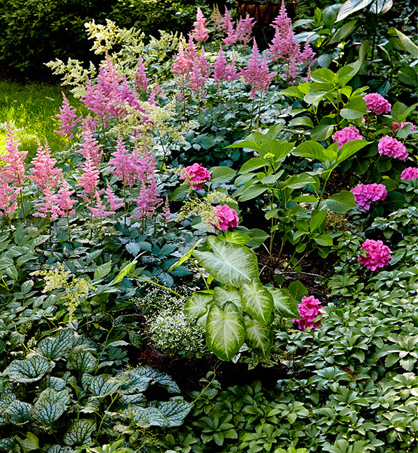 shade loving plant combinations for garden border subtle pink and greens: This shade border has a lush variety of foliage and bright blooms.