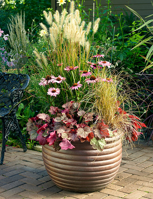 fall flower pot with coneflowers and coral bells: Since coral bells is a perennial, plant it in the garden a few weeks before your average last frost date.