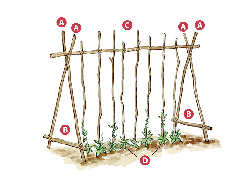 DIY Garden trellis made of branches