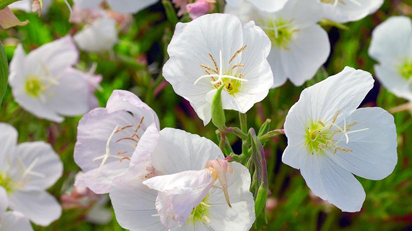 10 Low Maintenance Perennials For Your Garden