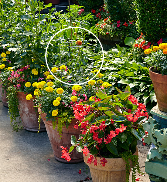Use tomato cages to support other plants: Tomato cages can also be used to support plants that tend to flop.