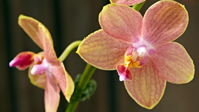 How To Repot An Orchid Garden Gate