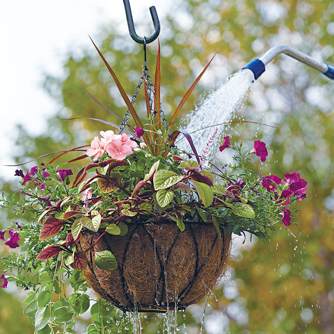 Watering hanging basket with watering wand: Regular watering is important if you want beautiful hanging baskets.