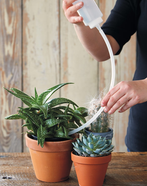 Sometimes Watering Cactus And Succulents Indoors Can Be Tricky If They Re Ed Close Together Or Growing Ly In Tiny Pots It S Time Consuming To