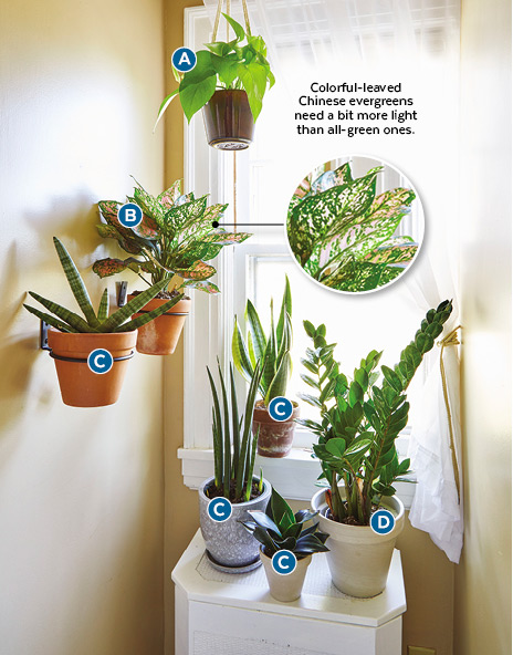 Decorating with houseplants north facing nook: Snake plant and ZZ plant are houseplants tolerant of dim light.