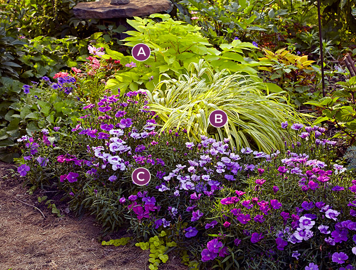 Labeled colorful garden border: This combination of chartreuse hakonechloa and purple dianthus shines in the shade.