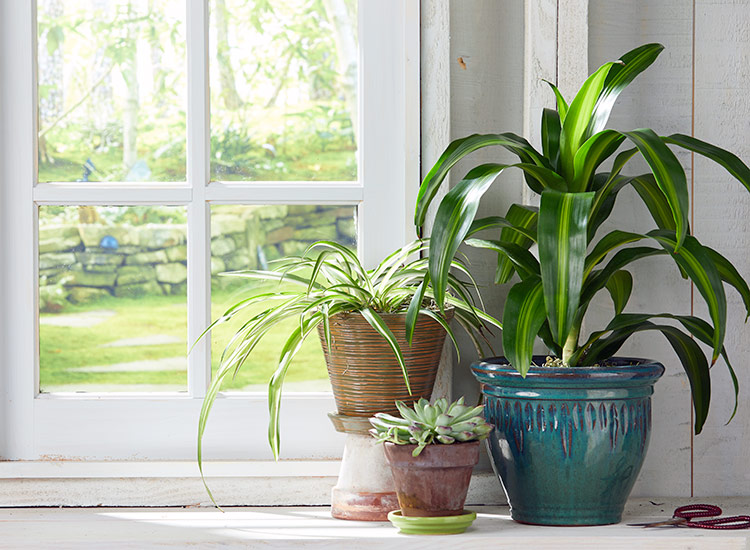 gardening-reduces-stress-houseplants: House plants can improve the air quality in your home.
