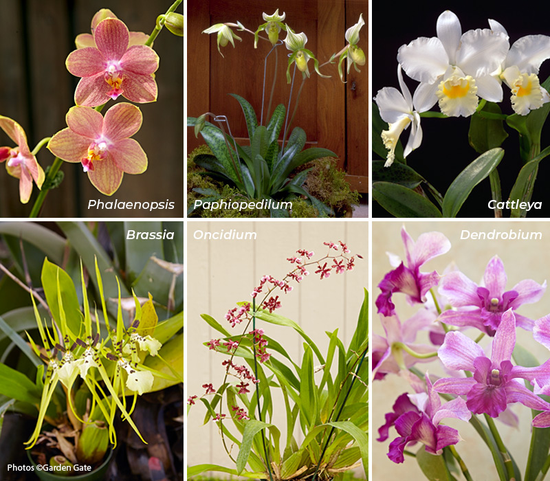 Different types of orchids Copyright Garden Gate: There is a wide array of orchids available, all unique in their own way.