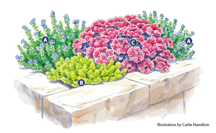 Lettered Sedum garden bed plan illustration by Carlie Hamilton