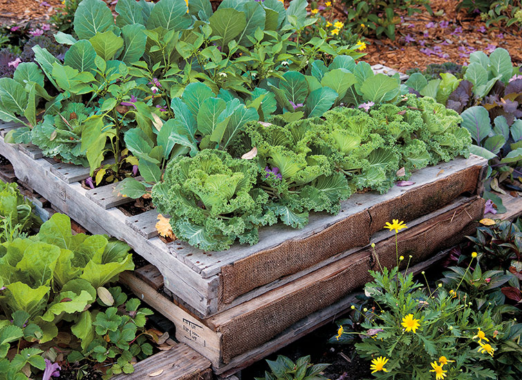 Diy Pallet Raised Garden Bed Gate, Build Raised Garden Bed Out Of Pallets