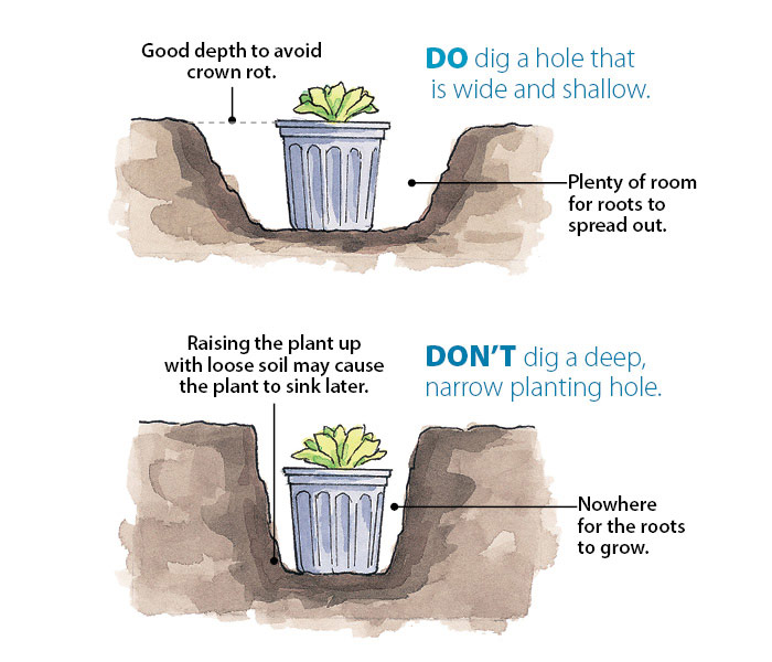 ht-p-plant-perennials-in-4-simple-steps-3