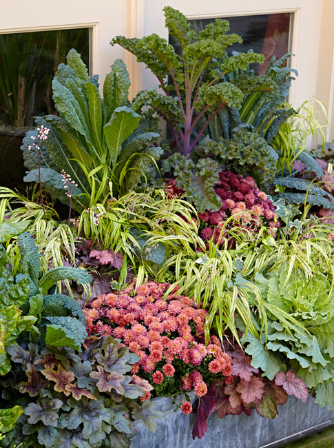 mums-kale-fall-container-vertical: You want a mature, and full, look right away, so choose plants that are the sizes you need and pack them in.