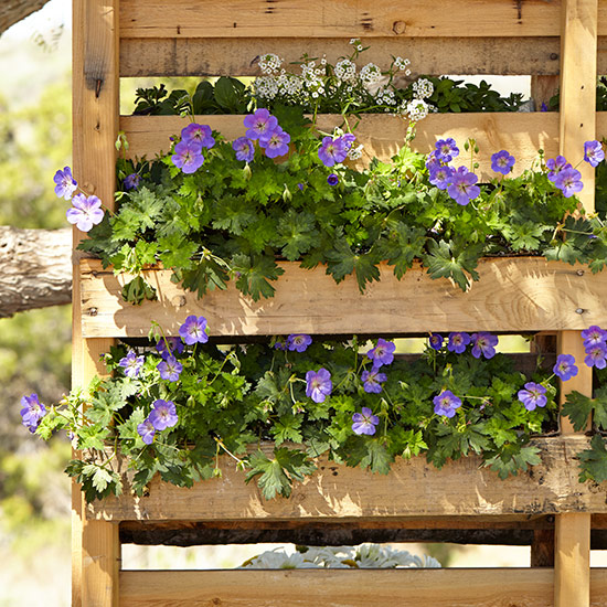 upcycled-pallet-planter-lead: Purple perennial geraniums and sweet alyssum have shallow root systems, making them a good fit for this vertical pallet planter.