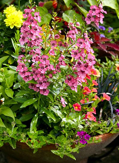 Meet 8 Of The Best Container Plants Garden Gate