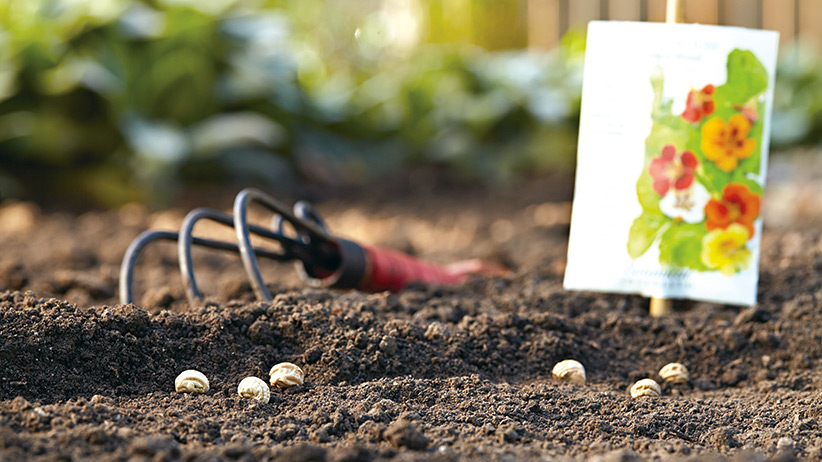 How To Sow Seeds Outdoors Garden Gate