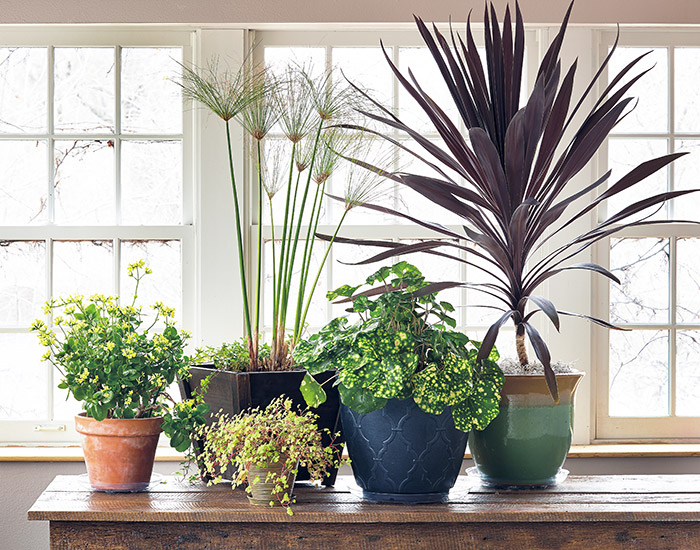 how-to-overwinter-container-plants-indoors-lead