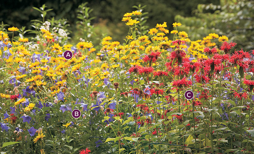 summer-perennial-garden-bed-ideas-warm-color-palette-labeled: This warm color palette adds energy to your garden.