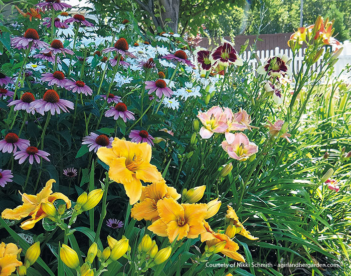 how-to-grow-great-daylilies-daylily-garden-border: Unified by the same foliage shape and color, three different daylily cultivars can be planted next to each other without looking mismatched.