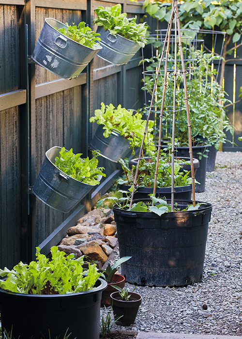 Plastic pots and galvanized tubs make great small space planters:A mix of different plastic and galvanized containers adds to the planting space in this garden