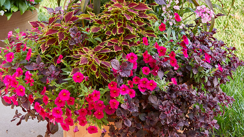 Fall flower pots preview image closeup
