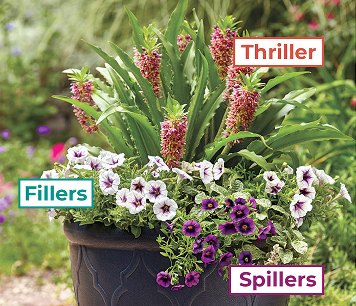 easy-formula-for-great-garden-containers-thriller-spiller-thriller-lead-3
