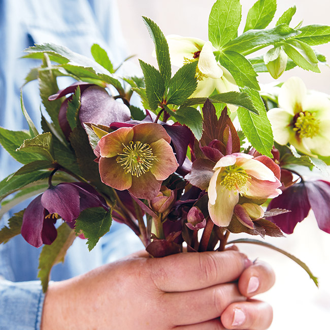 Hellebore spring bouquet: Also known as the Lenten or Winter rose, hellebores are some of the first flowers to pop up in spring, and make for beautiful bouquets!