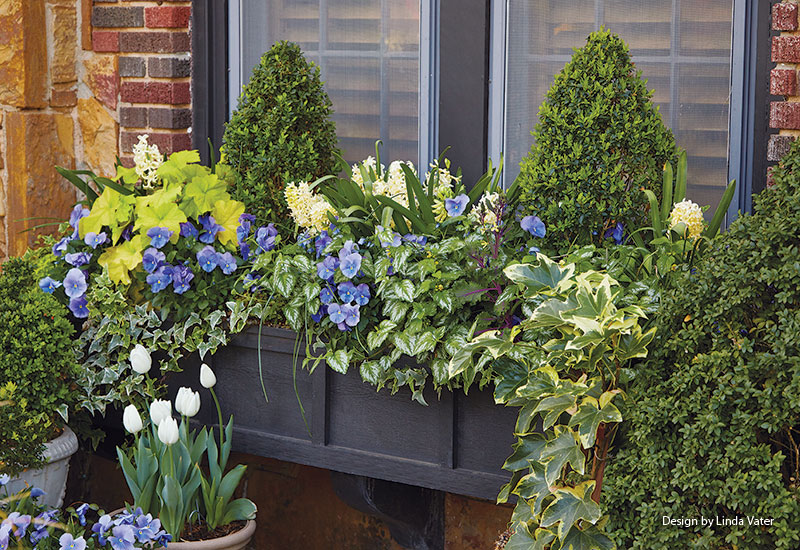 spring-window-box-linda-vater-lead: This large windowbox can hold a considerable amount of plants, but the plan below can be adjusted for smaller windowboxes.