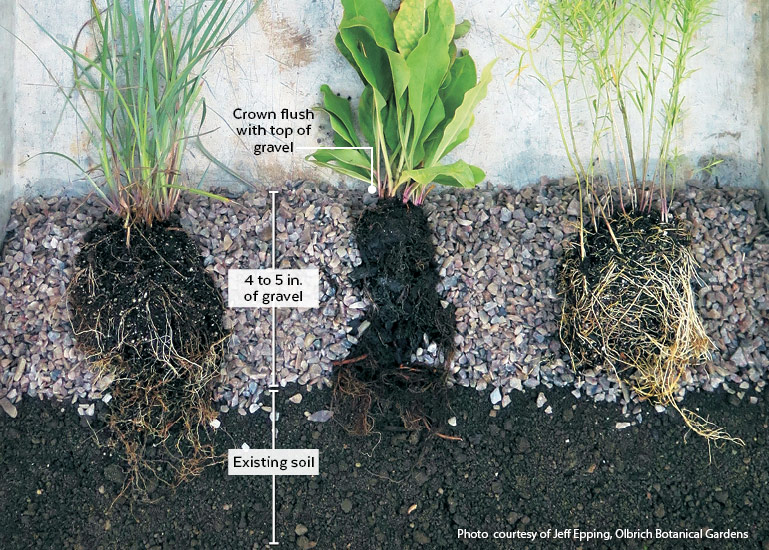 gravel-garden-diagram: This cutaway illustrates the layers of gravel and proper placement of plants in a gravel garden.