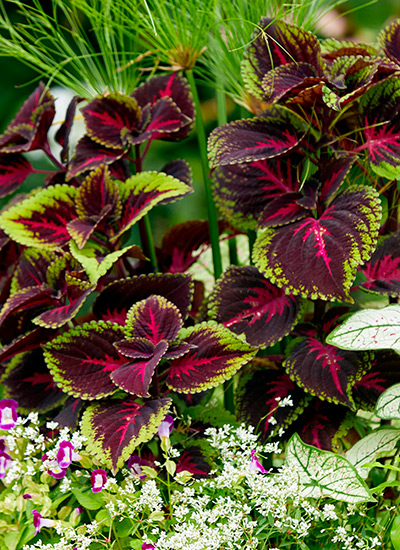 Meet 12 Of The Best Container Plants, What Plants Are Best For Patio Pots