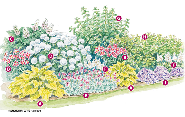 4-season-hydrangea-border-labeled2