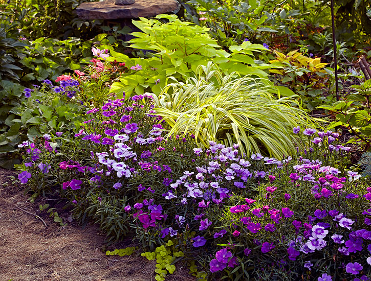 Colorful shade garden planting: This bold plant combination is perfect for an area that gets morning sun and afternoon shade.