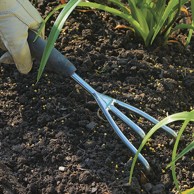 granulated fertilizer with cultivator: Scratch granulated fertilizer into the soil with a cultivator.
