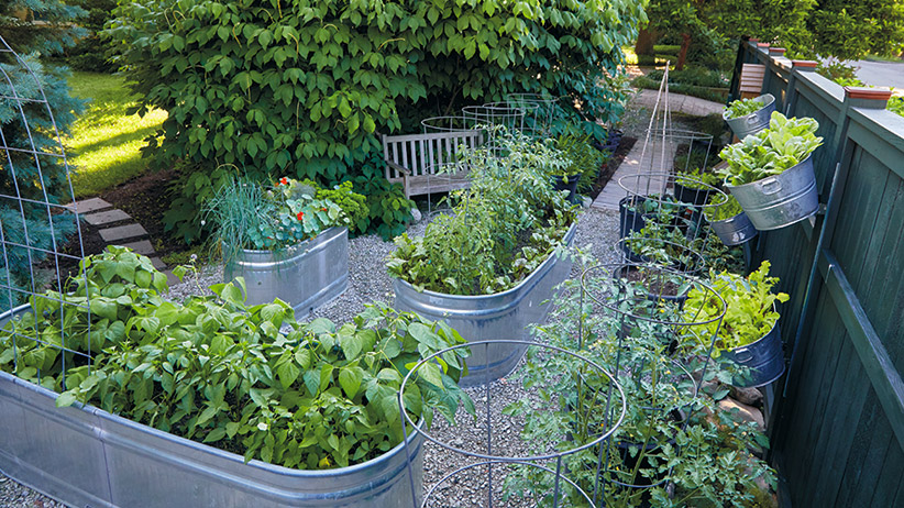 Galvanized raised garden beds dry out faster than in-ground plantings or raised beds:Galvanized raised garden beds dry out faster than in-ground plantings or raised beds, so check frequently to see if the trough needs water. If you detect moisture 2 to 3 inches down, you're good.