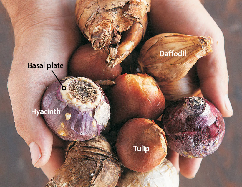 ht-time-to-plant-bulbs-1