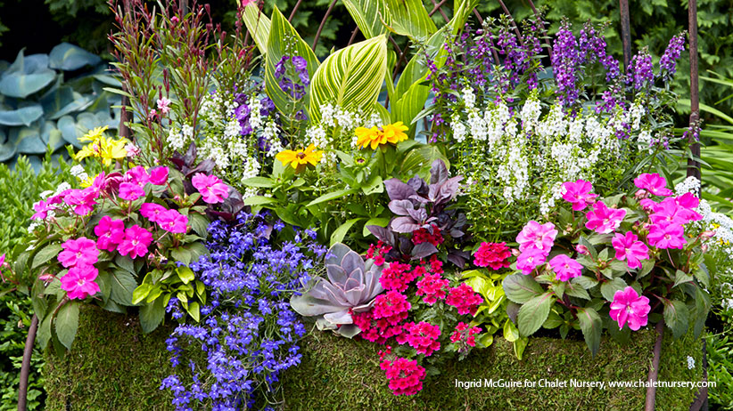 Colorful Summer Containers For Sunny Spots Garden Gate