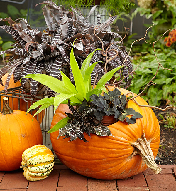 Fill a pumpkin with funky foliage