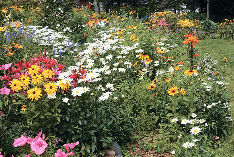 Combine-flower-shapes-in-your-garden-Lead: Planting a lot of different shapes will keep your eye moving throughout the entire garden. This makes it more interesting to look at — your eye keeps seeking the next shape & pollinators will love it too.