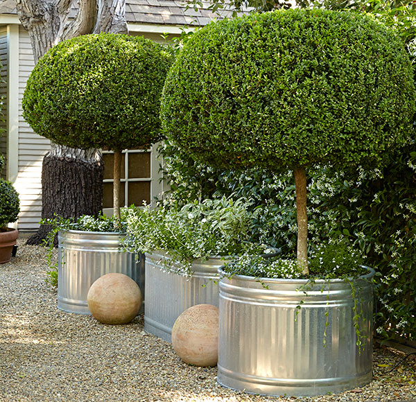 cozy-garden-boxwood-topiary: It's time to move topiary boxwoods up to a larger pot size when you notice that growth isn't as vigorous.