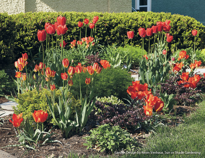 dw-right-bulb-right-place-Hot&DrySpots: Tulips do well in hot and dry spots in your garden.