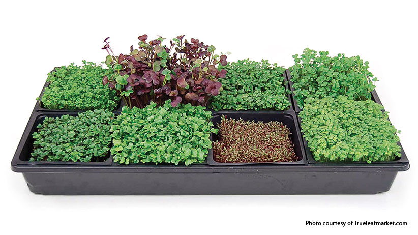 microgreens-growing-kit-trueleaf-market