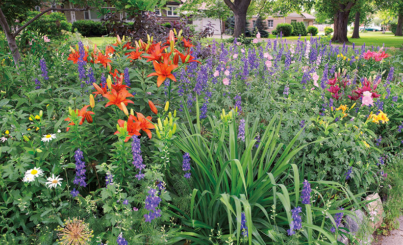 Orange-plants-for-your-garden-lily-garden-border: A splash of orange like the lilies here can ignite a garden border.