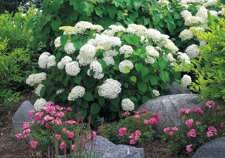 Four Season Hydrangea Border Garden Gate