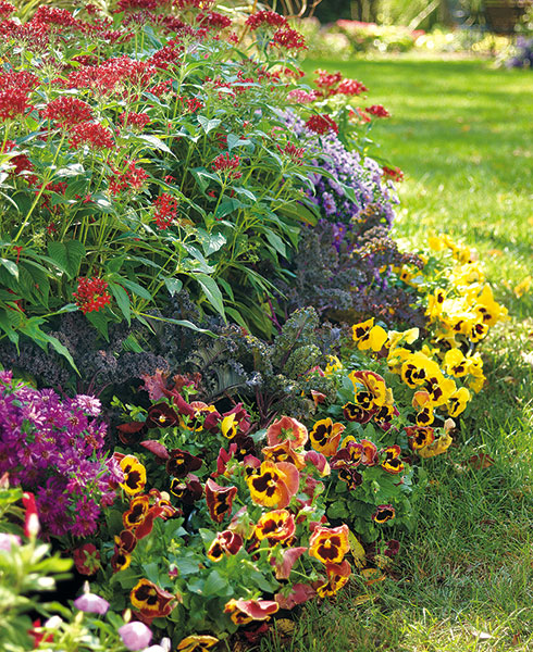 Long-late-season-bloomers-combo-lead: Asters, starflowers, pansies & flowering kale make for a beautiful fall display.