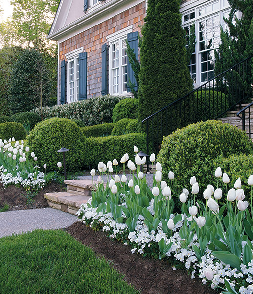 Mass planting of tulips and pansies along house foundation: The mass of tulips and pansies add impact in this formal garden.