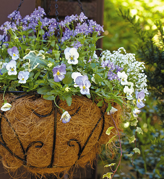 Spring hanging basket with pansies, ivy and alyssum: Pansies are a classic flower for spring containers. Plant them near the edge and they'll drape over the side.