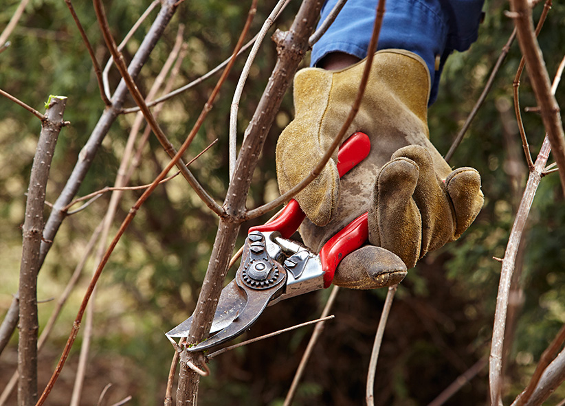 GW tools-pruners: Use hand pruners for branches up to ½ in. thick.
