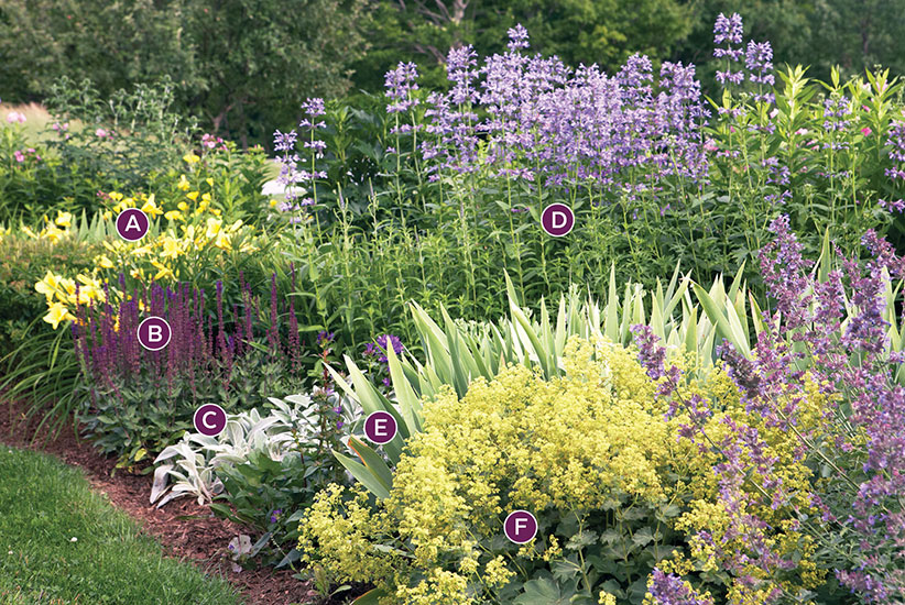 summer-perennial-garden-bed-ideas-cool-color-palette-labeled: The variety of flower shapes in this garden bed add interest.