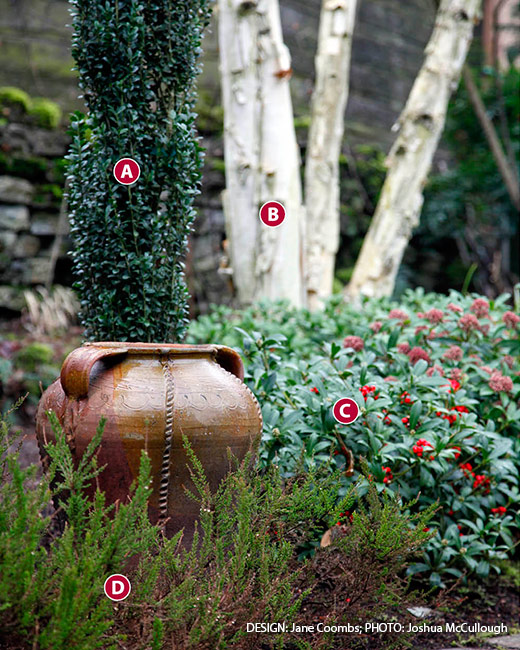 winter-plant-combinations-birch-Japanese-Holly-heather: Bark and berries add interest to your winter garden.